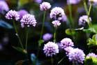 晴天下で花を撮る。