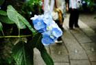 鎌倉散策とLOMO風写真。