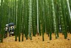 鎌倉散策記#03「報国寺」。