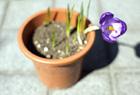 春、始めます。
