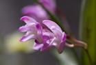 DP2とEOS5Dで花を撮る。